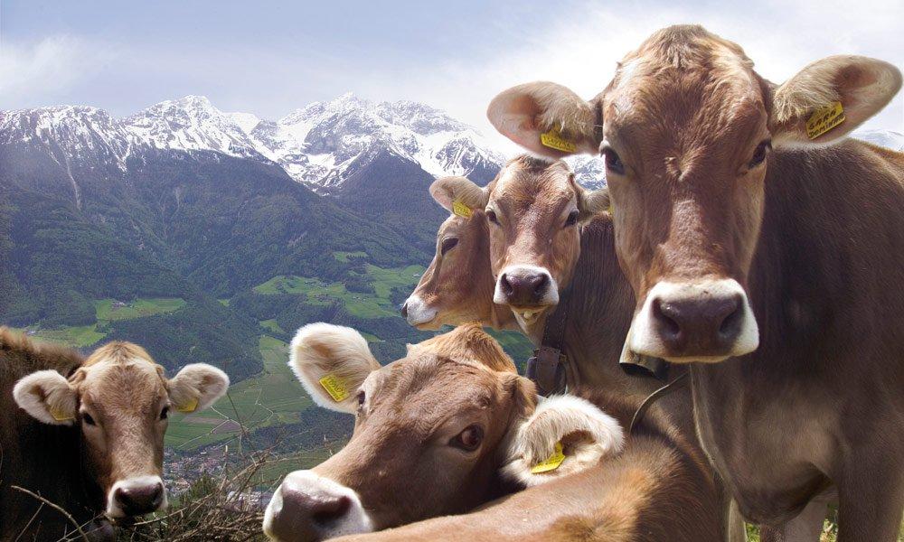 Tiere am Bauernhof in Untermoi – Dolomiten